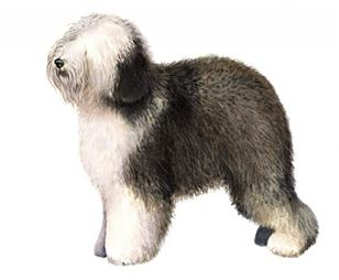 old English sheepdog set