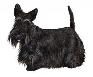 Scotish Terrier set