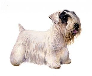 sealyham terrier set