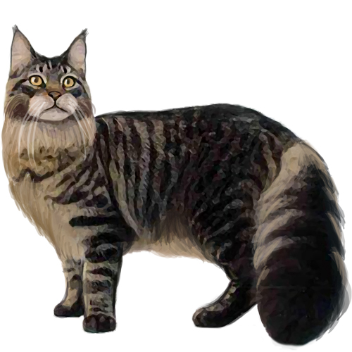 Maine Coon set