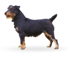 Jagd Terrier set