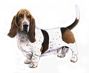 basset hound set