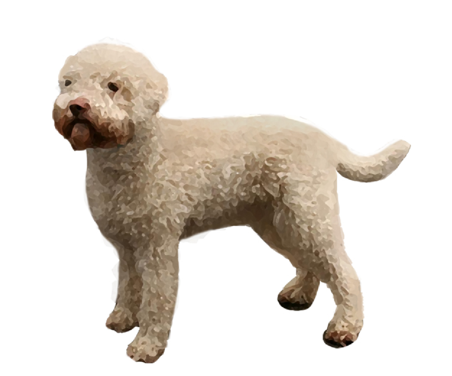 Lagotto Romagnolo set