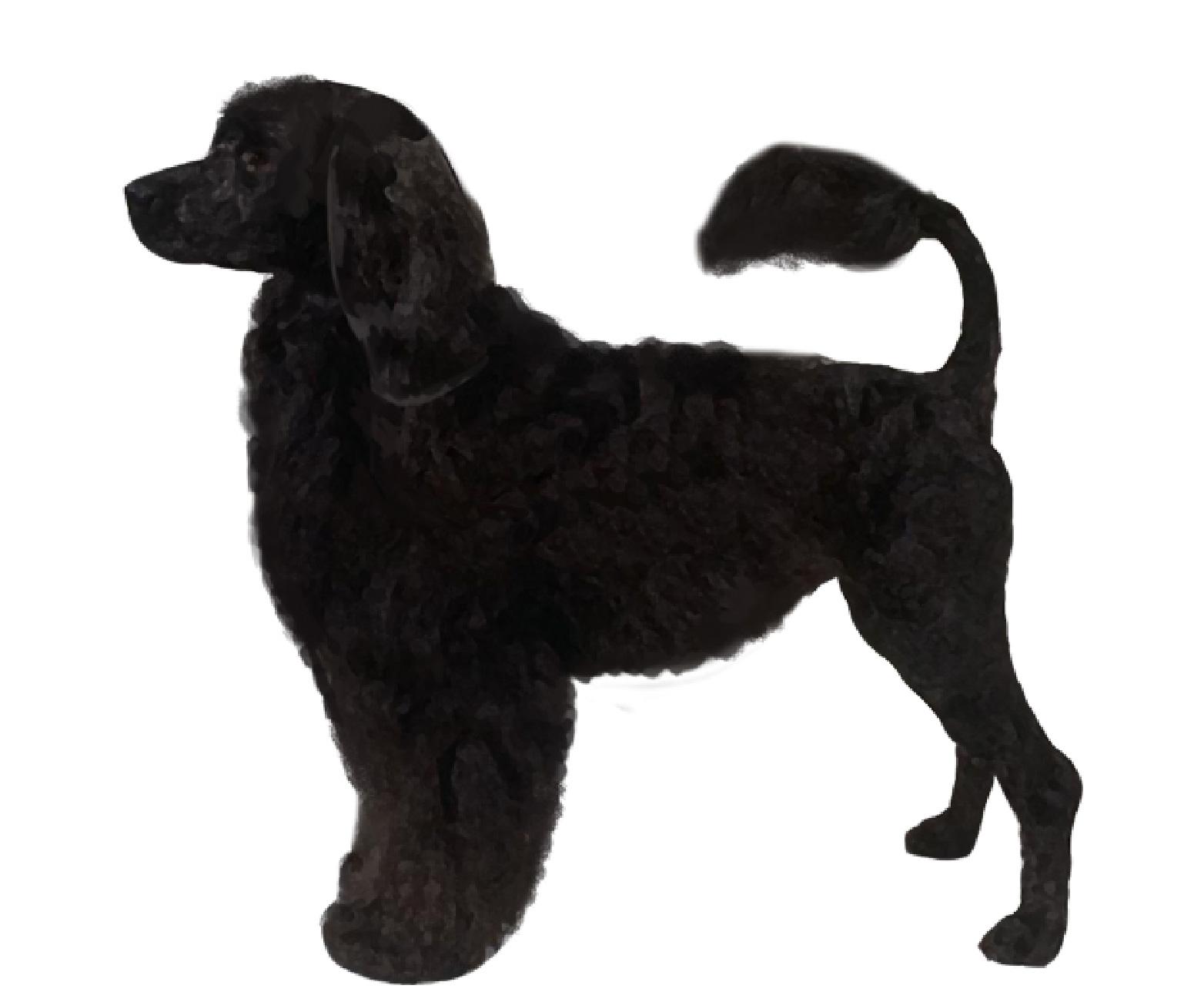 Portuguese Water Dog set