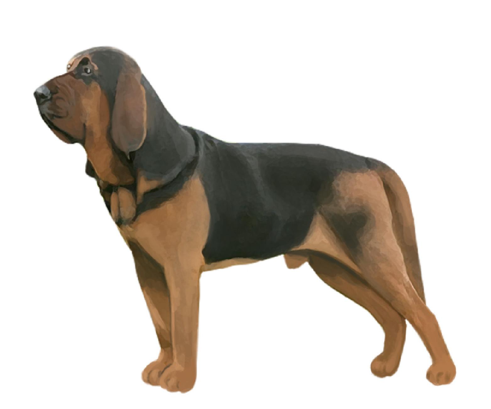 Bloodhound set