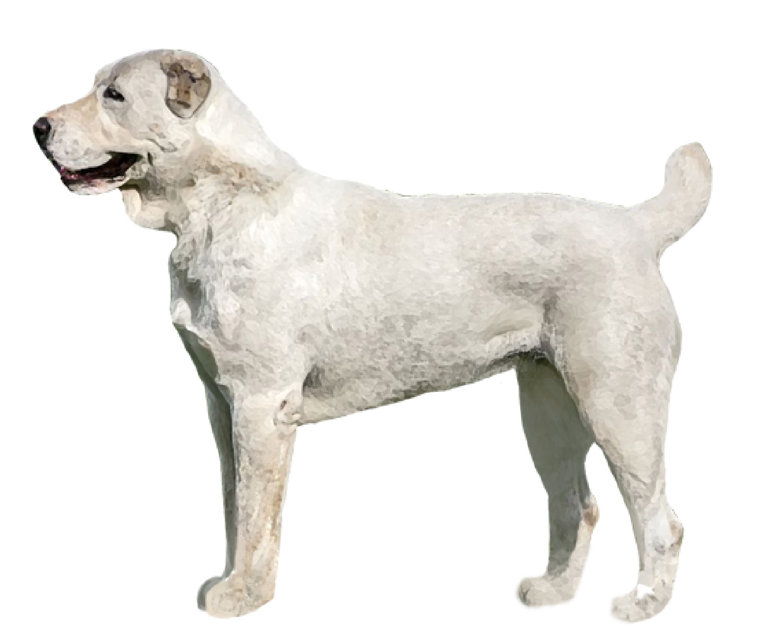 Central Asian Shepherd Dog