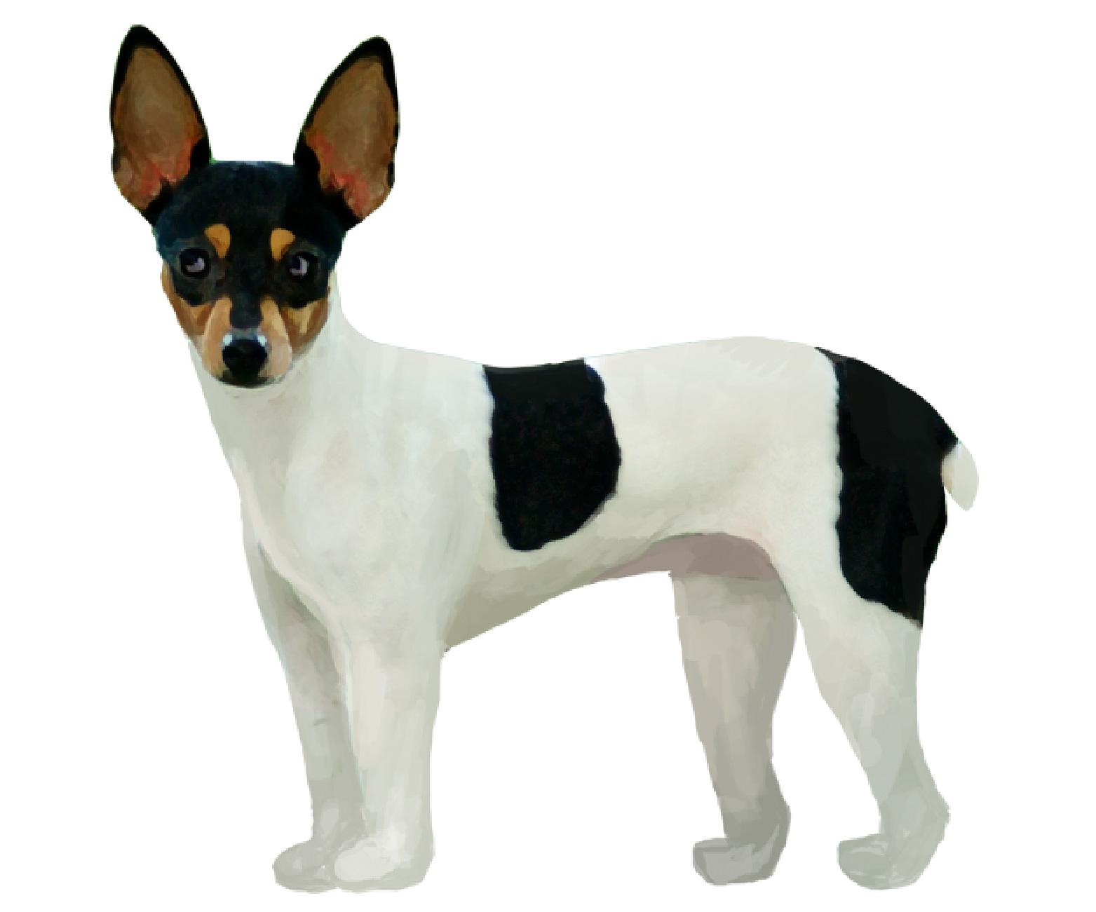 Miniature Fox Terrier set