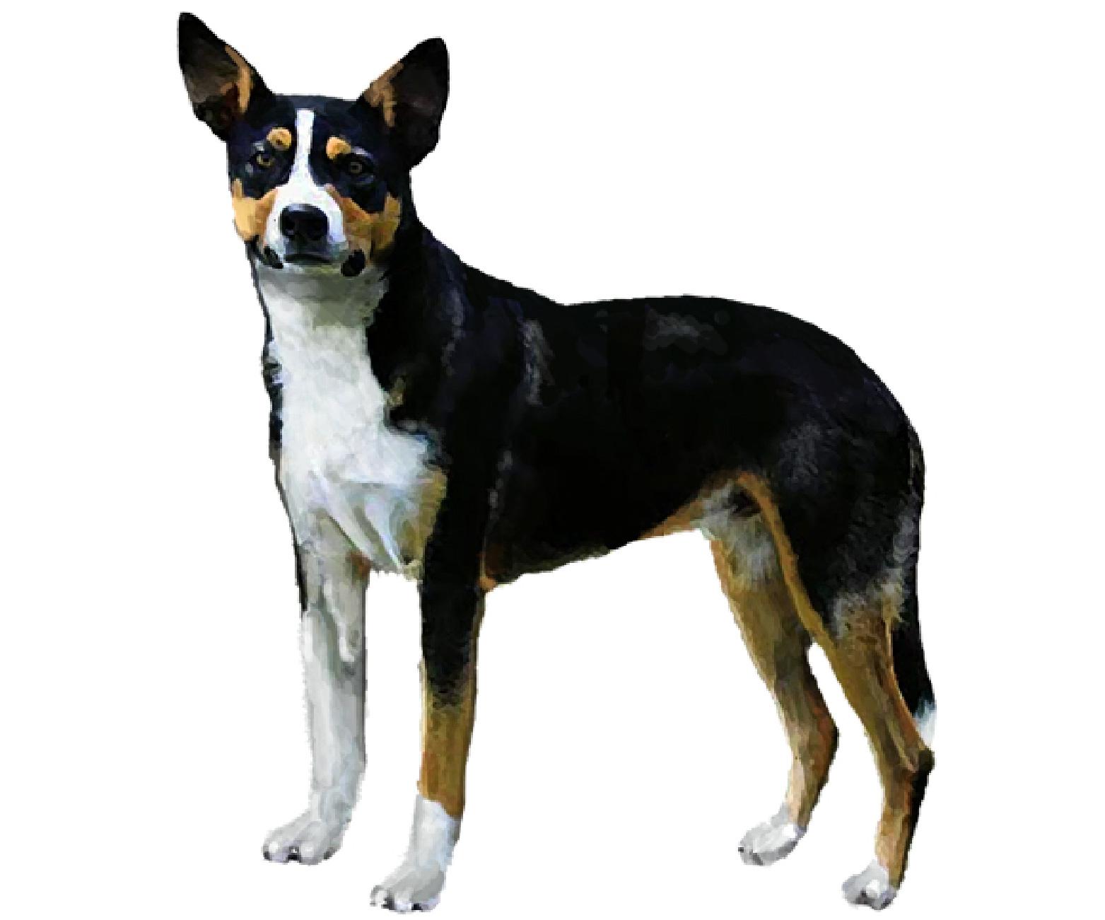 New Zealand Heading Dog set