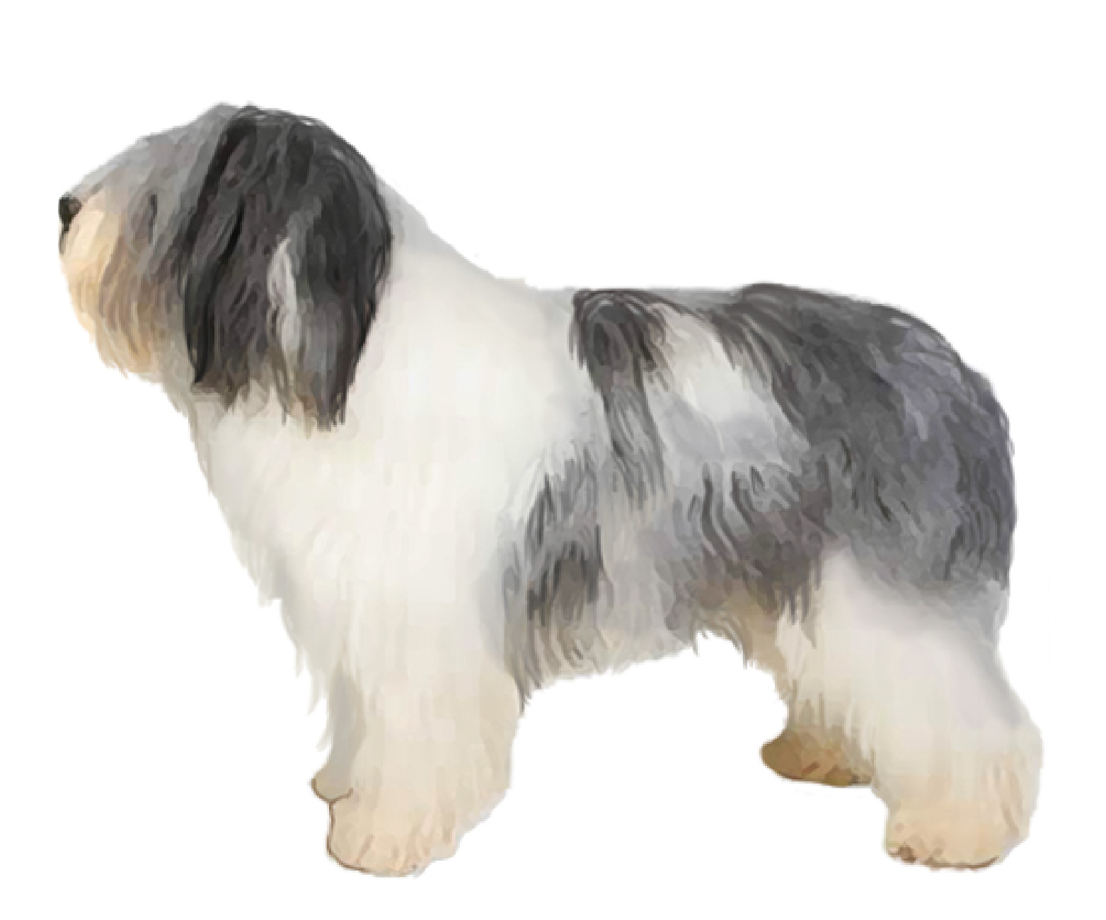 Polish Lowland Sheepdog sa
