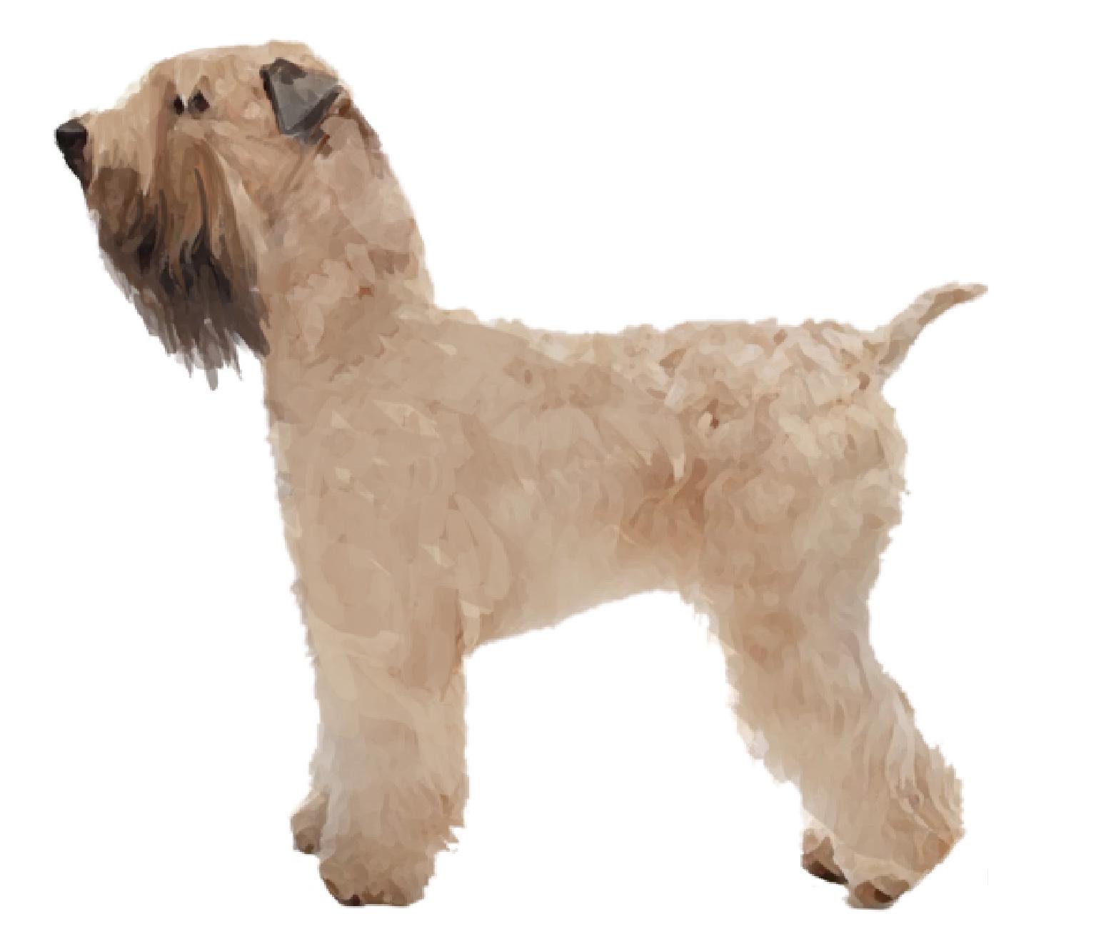Soft Coated Wheaten Terrier set